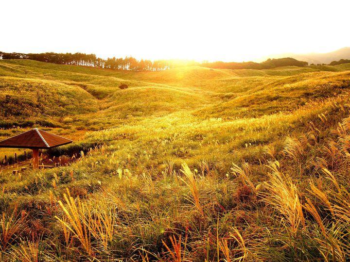【終了】国内最大級の黄金のすすき野原!東伊豆で「秋のすすきイベント」開催