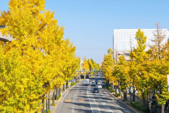 【終了】甲州街道を彩るいちょう並木!「第39回八王子いちょう祭り」開催