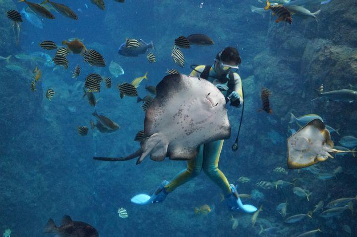 """次のお出かけは""""えのすい""""へ!新江ノ島水族館でしたいこと7つ"""