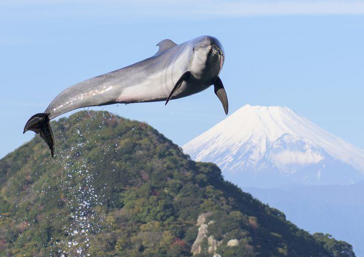 富士山も見える!「伊豆・三津シーパラダイス」で体験したい5つのこと