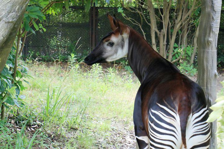 よこはま動物園ズーラシアでしたい7つのこと!広大な敷地で動物とふれあおう