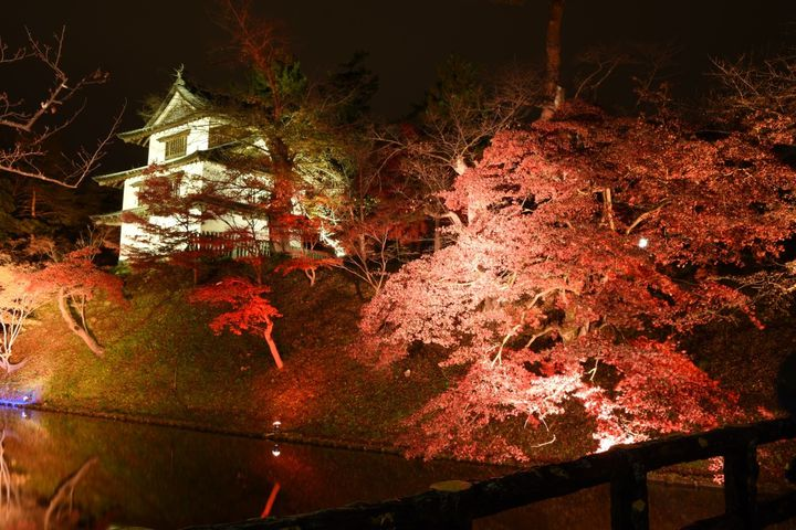 【開催中】楓と桜の紅葉をライトアップ!青森「弘前城 菊と紅葉まつり」開催