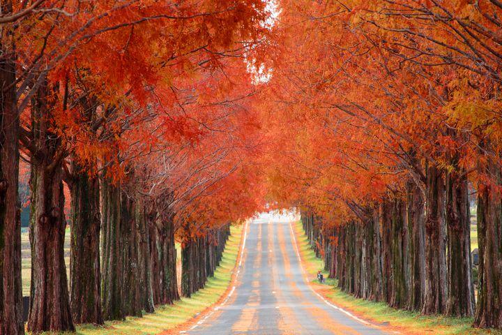 紅葉の季節、今年はどう楽しむ?今どきの「紅葉の楽しみ方プラスα」はこれだ