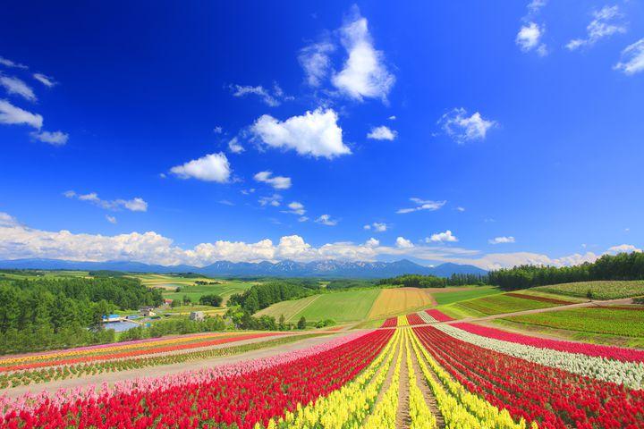 東北の春はこれから!東北地方の旅したくなる「春のお花畑スポット」12選