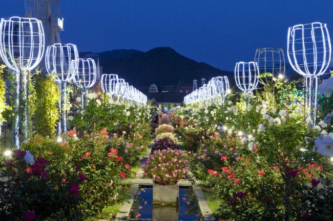 【終了】ライトアップやイルミネーションも!ハウステンボスで「秋バラ祭」開催