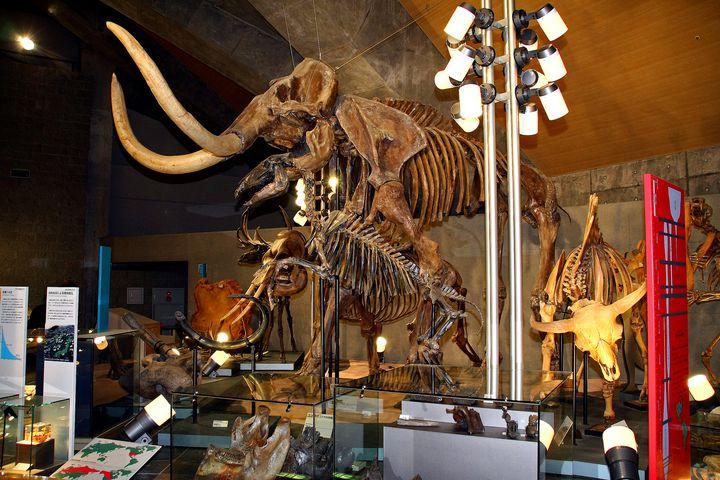 大迫力の恐竜模型が人気!「群馬県立自然史博物館」でしたい5つのこと