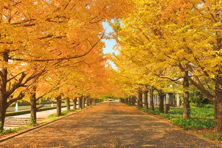 【終了】秋の絶景がすぐそこに。国営昭和記念公園で「黄葉・紅葉まつり2018」開催