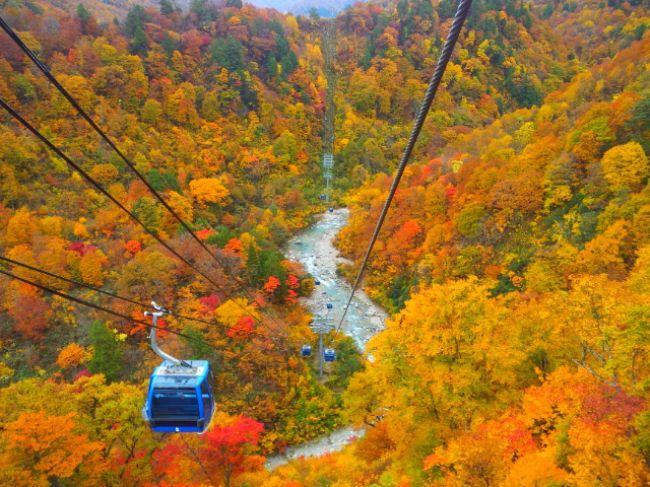 今がピーク!新潟県・苗場スキー場周辺の紅葉を空中から見下ろしたい