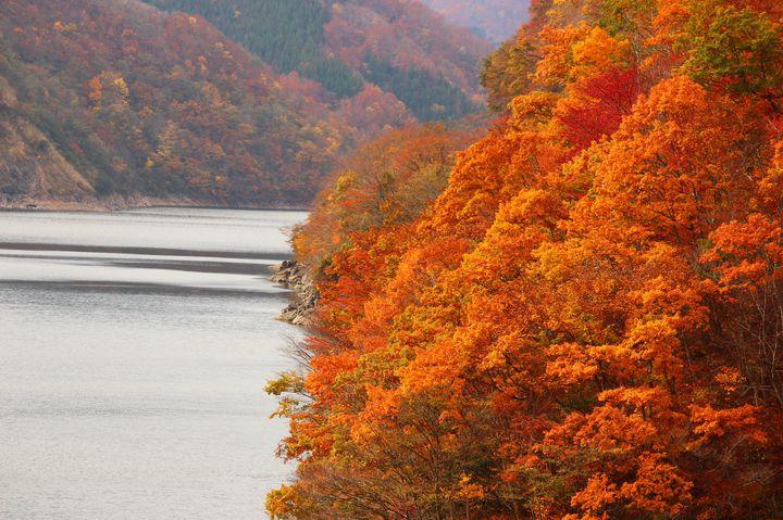【終了】全身で秋を感じる旅へ。「九頭竜紅葉まつり」開催