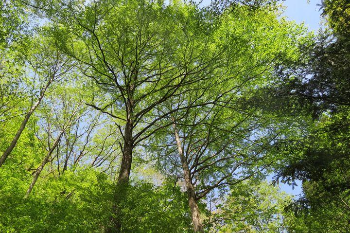 東京で自然を満喫!「都民の森」でしたい5つのこと