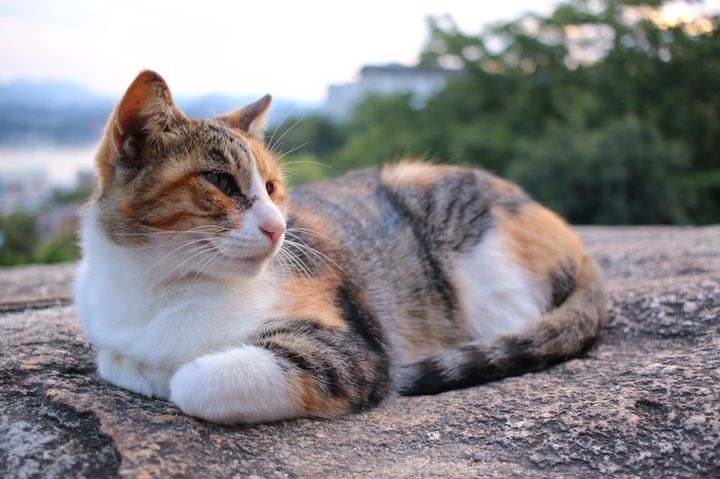 猫好きは絶対行くべき!ネコの魅力がいっぱい詰まった広島・尾道とは
