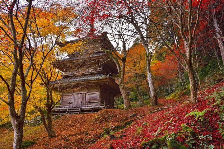 【超厳選】目を疑うほどの絶景に出会う旅。関西の美しすぎる至極の紅葉名所9選