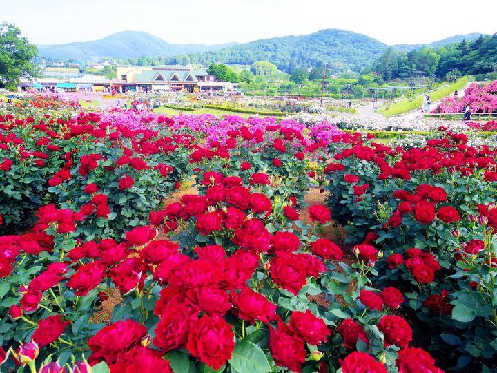 カメラ好きにオススメしたい!茨城県フラワーパークの楽しみ方5選