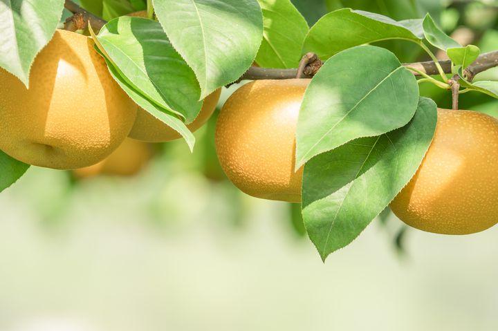 【日本全国】味覚の秋だから。11月にできるフルーツ狩りスポットまとめ