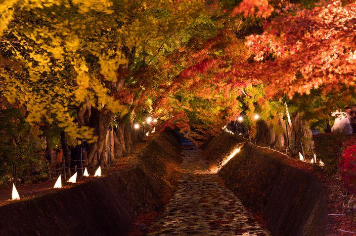 秋ならではの楽しみが詰まってる!11月に山梨に行きたい10の理由をご紹介