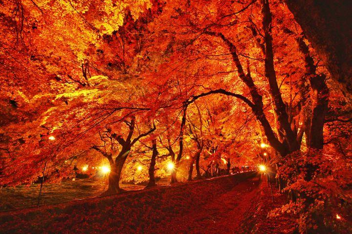 秋夜に燃ゆる紅葉に恋をした。関東近郊の紅葉ライトアップ10選【2018】