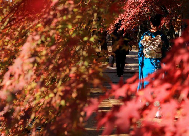 """2018年、秋、京都。""""極上の秋旅を楽しむ""""京都のスポットまとめ"""