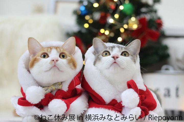 【終了】サンタ姿の猫たちが集合!人気イベント「ねこ休み展」今年も横浜で開催