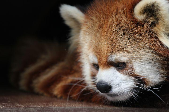 徳島でシロクマ?行かなきゃ損損な「とくしま動物園」でしたい5つのこと