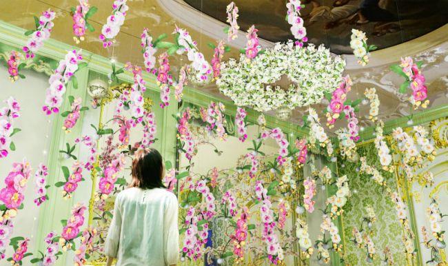 【終了】国内最多!200品種の蘭の祭典「大胡蝶蘭展」ハウステンボスで開催