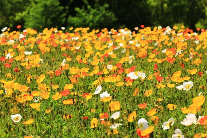 自然に触れ合ってリフレッシュ!広島市植物公園でしたい5つのこと