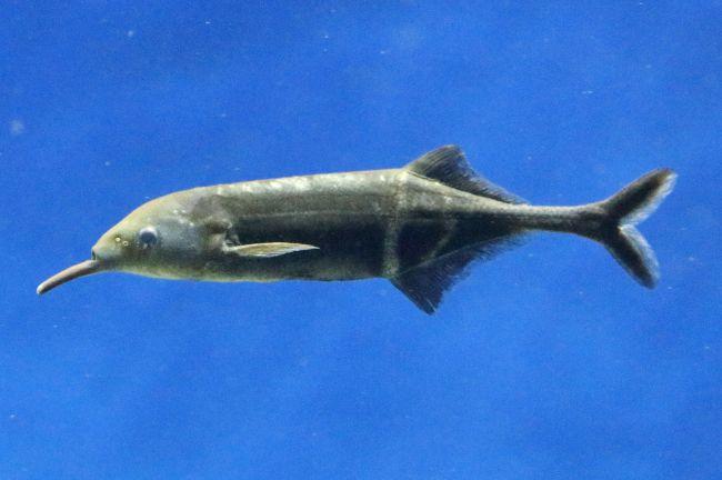 インパクト抜群!池袋で「サンシャイン水族館×早川いくを へんないきもの展3」開催