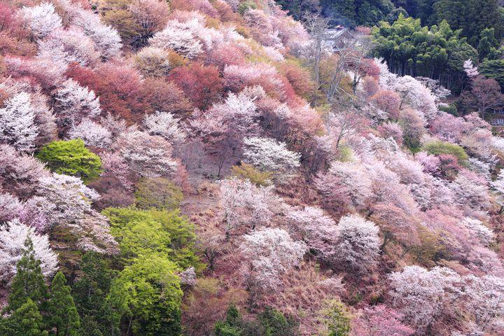 とにかくエモい絶景を求めて。ドライブで行きたい桜の名所list