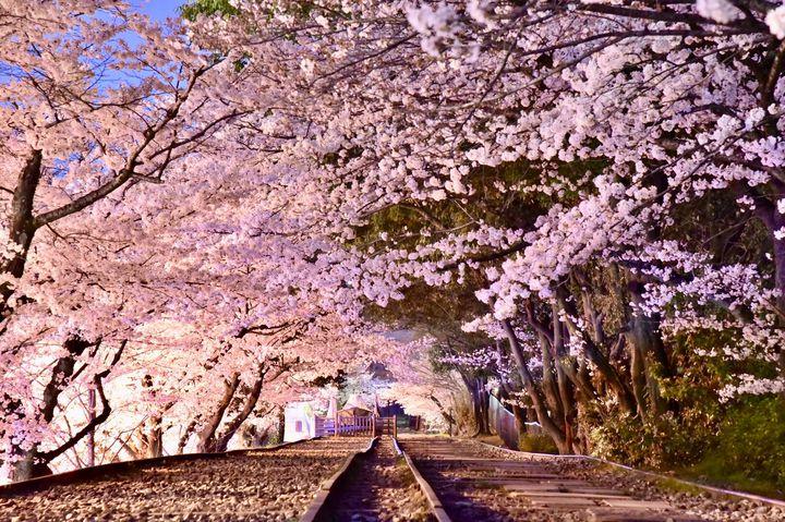 """そうだ、平成最後の春、京都に行こう。京都の""""満足度120%""""の春旅スポットまとめ"""