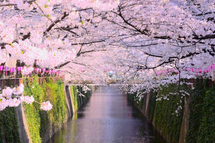 桜を眺めたらカフェでひと休み。お花見ついでに立ち寄りたい目黒川沿いのカフェ7選