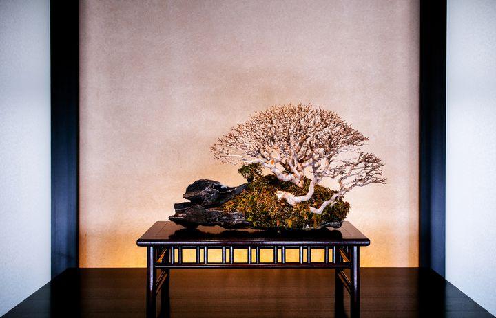 盆栽の流行に今乗るしかない!埼玉県さいたま市の盆栽美術館とは。
