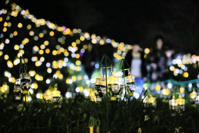 【終了】福井の絶景イルミネーション!「水仙岬のかがやき2019」開催