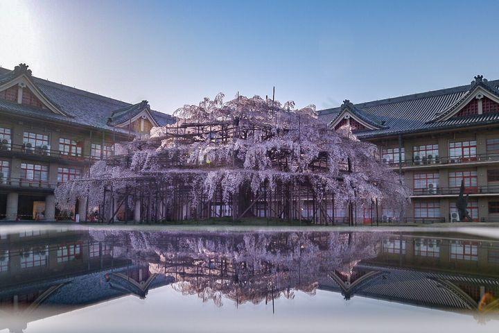 そんなコラボレーションしてたの?日本全国の「桜×〇〇」絶景スポット9選