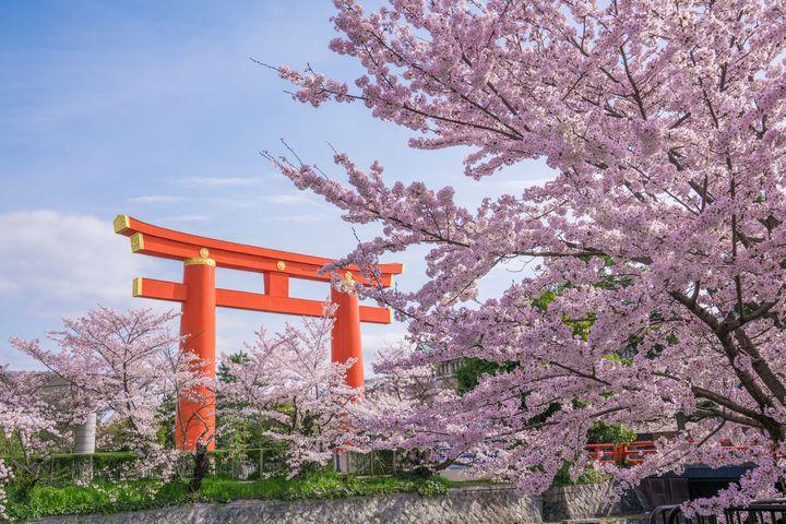 平成最後のお花見へ!家族みんなで楽しめる「京都旅」の秘訣とは