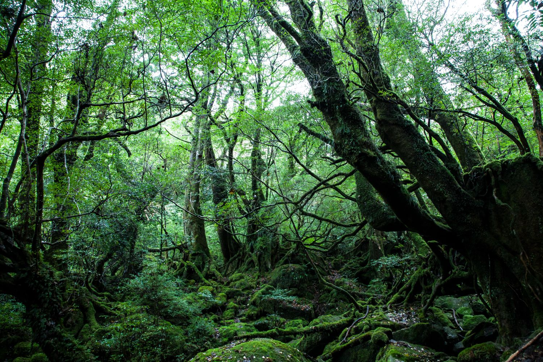 自然に囲まれて暮らしたい!屋久島でしか体験できないスローライフの楽しみ方とは