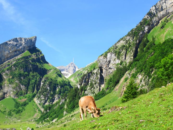 時間を忘れてのんびりと。スイス「アッペンツェル」を満喫できる観光スポット6選