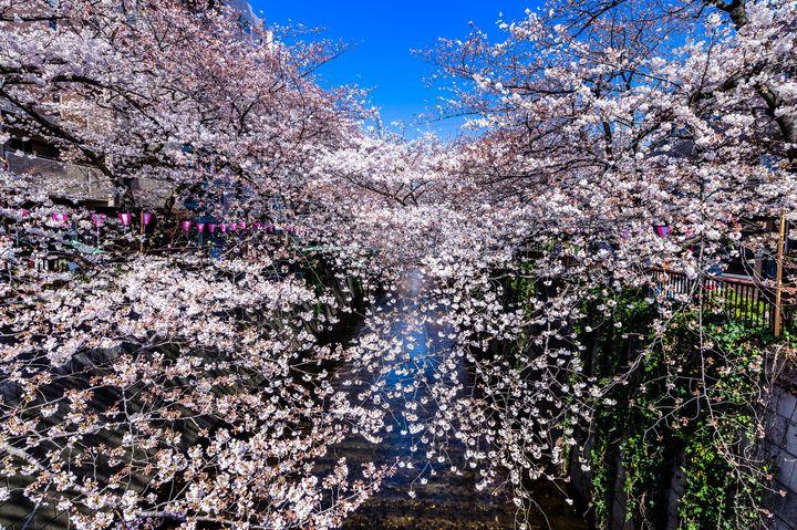 私、花も団子も欲張ります。東京お花見スポット×テイクアウトグルメ7選