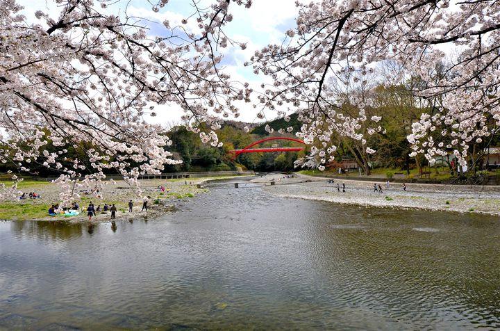 平成最後のお花見は埼玉県の「飯能」で名所めぐり!