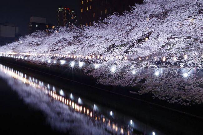 """新年度を迎える季節!東京都内の""""今週したいこと""""7選"""