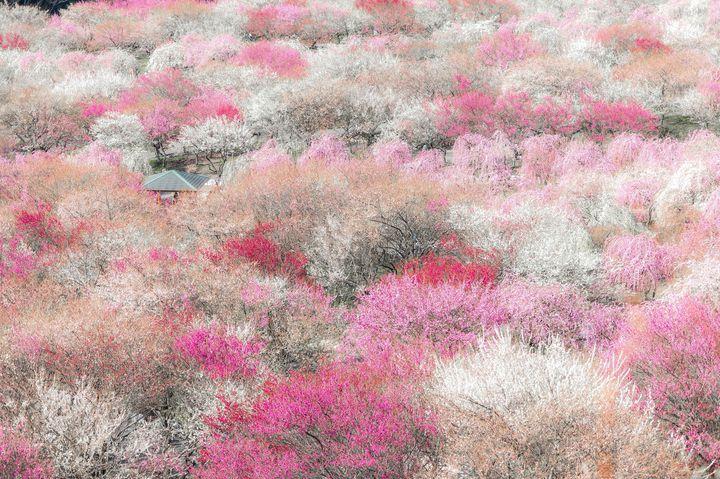 """日本の""""絶景""""が決定!RETRIPのInstagram2月いいね数TOP10"""