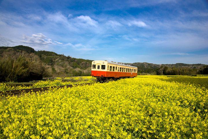 千葉県ローカル線の旅。小湊鉄道で行くおすすめ日帰りプランをご紹介