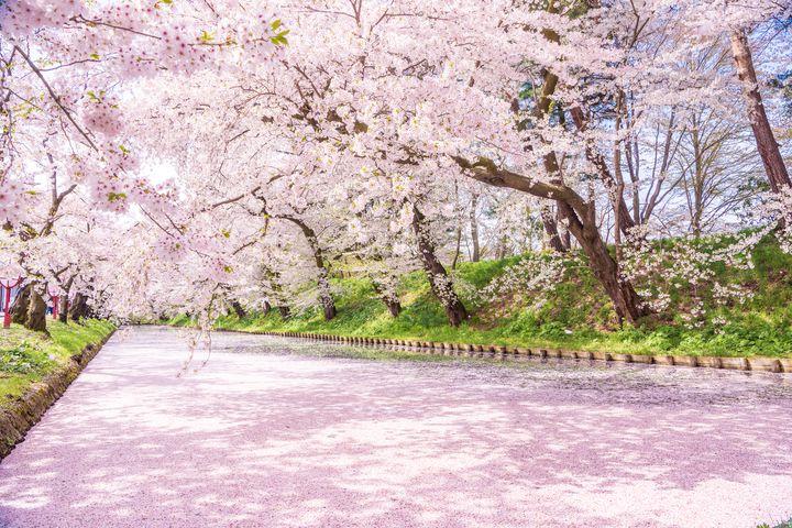 今年の花見はお預け!写真で楽しめる来年こそ行きたい桜の絶景10選