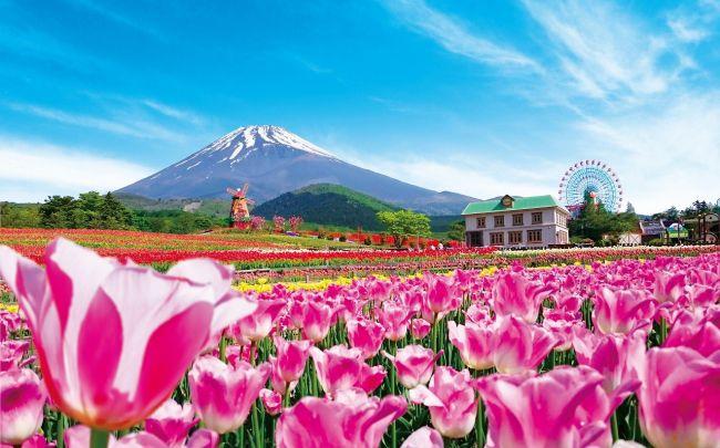 【開催中】雄大な富士と20万本のチューリップが織りなす絶景!「天空のチューリップ祭り」開催