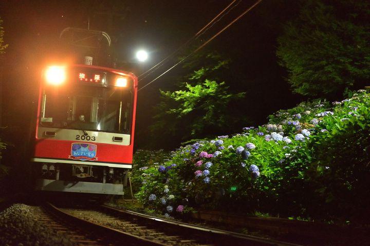 【終了】電車に揺られながら楽しむ、特別な絶景。箱根「夜のあじさい号」今年も登場
