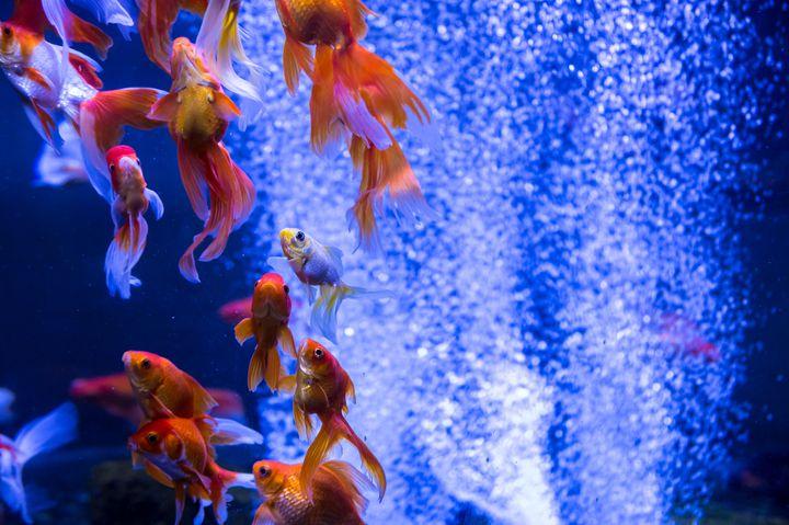越谷 レイク タウン 水族館