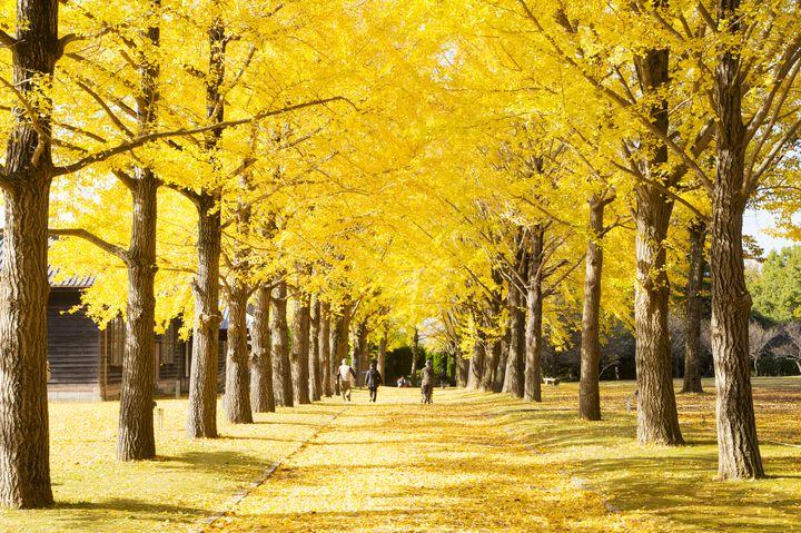 茨城の歴史と四季折々の美しい風景を!茨城県立歴史館でしたい5つのこと