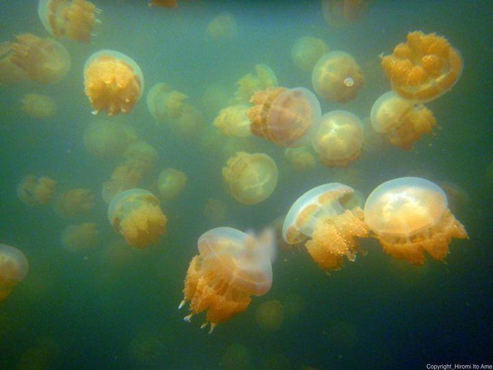 ダイビング初心者にも楽しめる!パラオの海でおすすめシュノーケル・ポイントまとめ