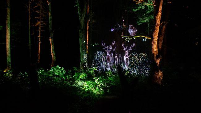 """【終了】自然xアイヌ文化×デジタルアート。""""阿寒湖の森ナイトウォーク""""釧路に誕生"""