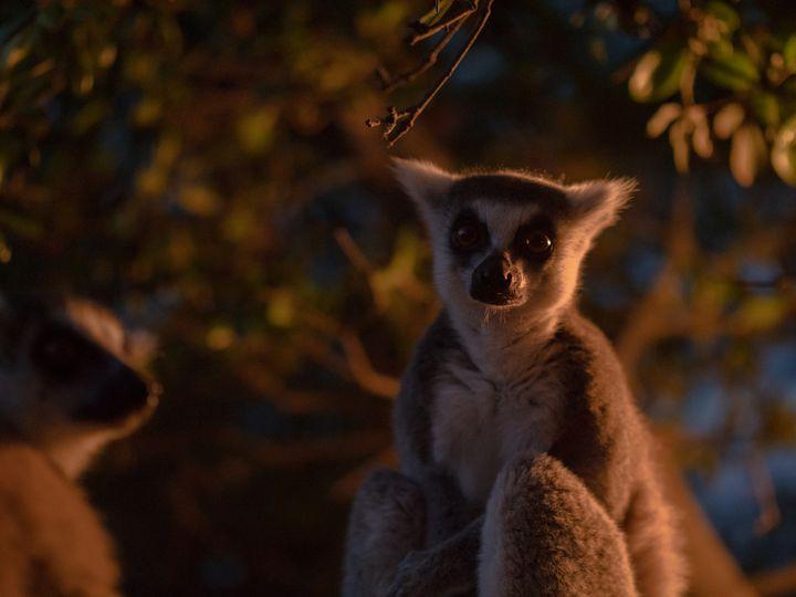 【終了】涼しい夏の夜に動物園へ。高知県で「のいちdeナイト」が開催