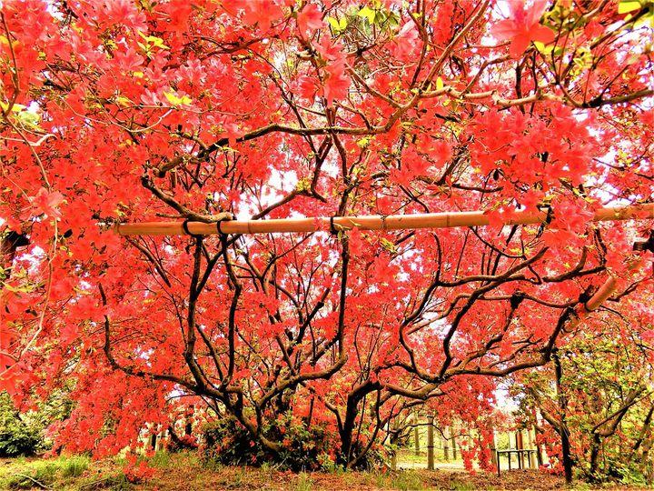 まだ見ぬ景色にきっとあなたも驚く。「群馬県・館林市」の魅力5選