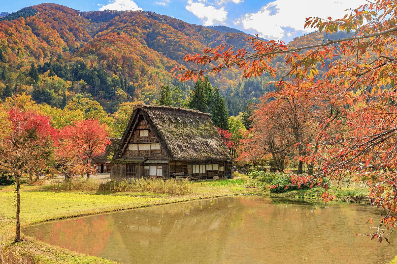 風情ある日本の秋。合掌造りで有名な「白川郷」が紅葉で彩られる                当サイト内のおでかけ情報に関してこのまとめ記事の目次